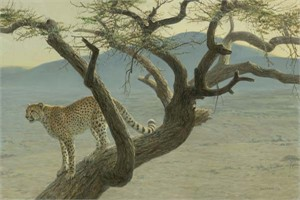 Robert Bateman Hand Signed And Numbered Limited Edition Print  and Canvas Giclee :&quot;Lewa Cheetah&quot;