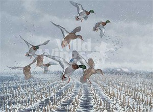 Michael Sieve Original Oil Painting:&quot;Northern Flight-Mallards&quot;